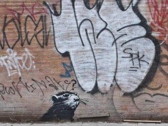 A confused rat ~ Banksy