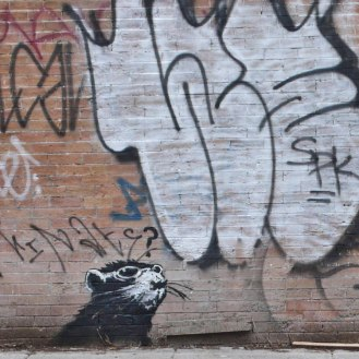 A confused rat ~ Banksy